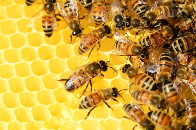 Manuka Honig Produkte Bienen Sammeln