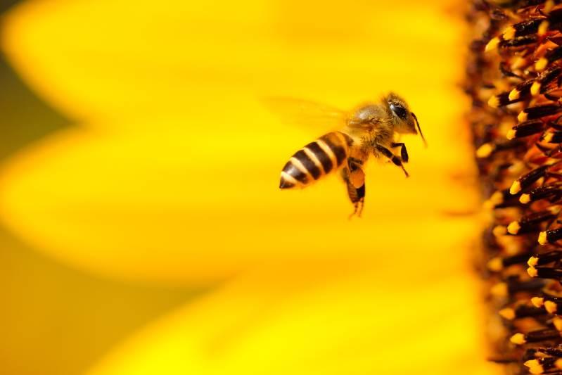 Manuka Honig bei Blasenentzündungen - Ein effektives & natürliches Heilmittel 1